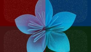 flower-871410